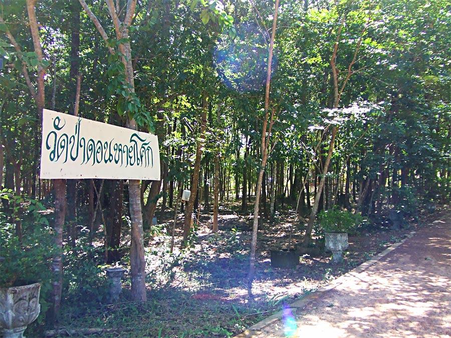 รูป ธรรมชาติทั่วๆไปในวัดป่าดอนหายโศก ถ่ายปี 2550