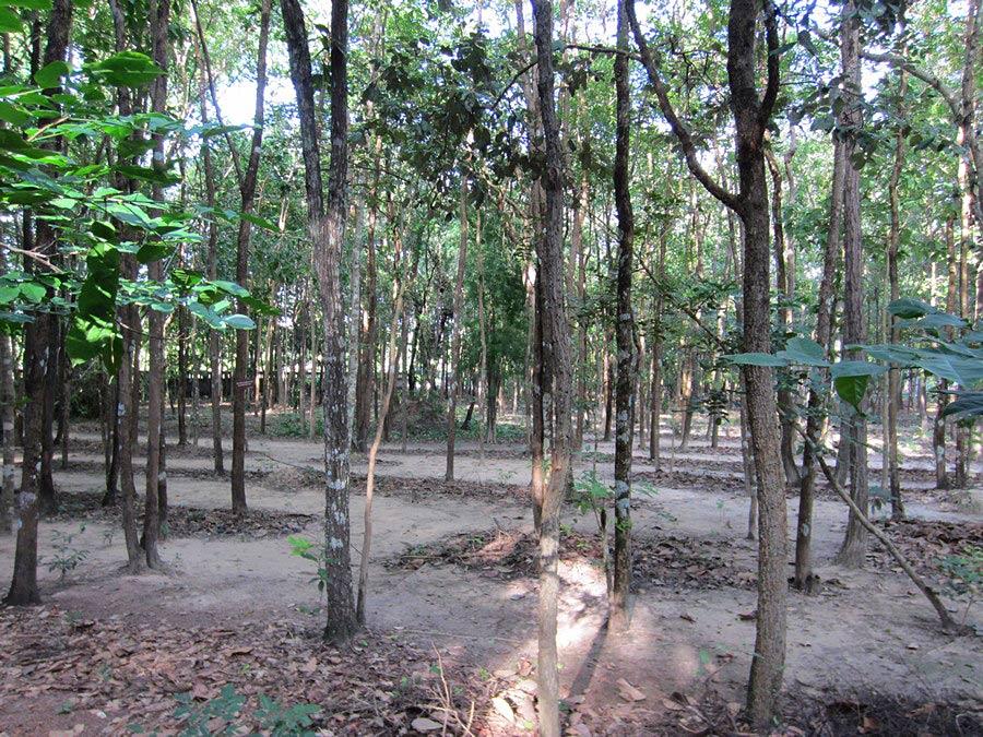 ทางจงกม หลังลานโพธิ์ วัดป่าดอนหายโศก
